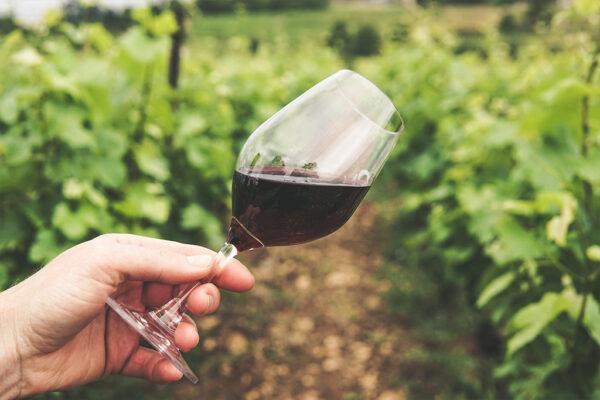 Dégustation des vins : Clemara